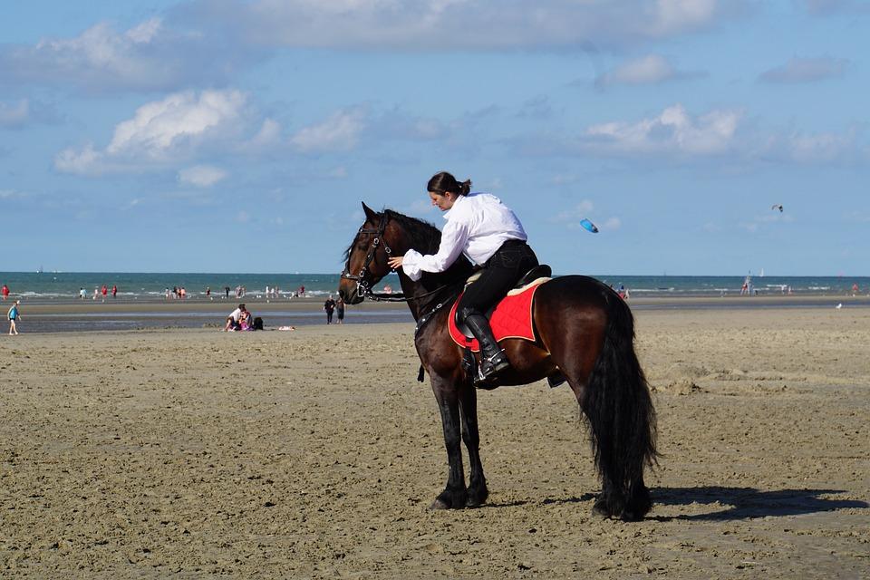 Horsewoman, Belgian Rider, Horse Show