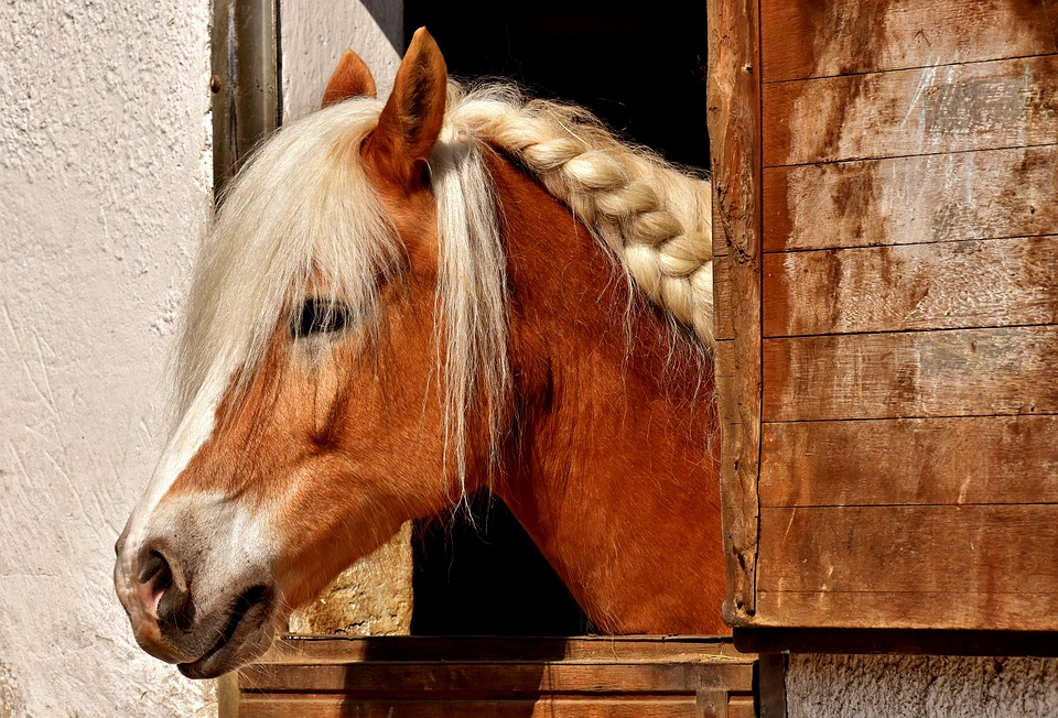 Horse, Horse Stable, Animal, Ride, Nature, Brown