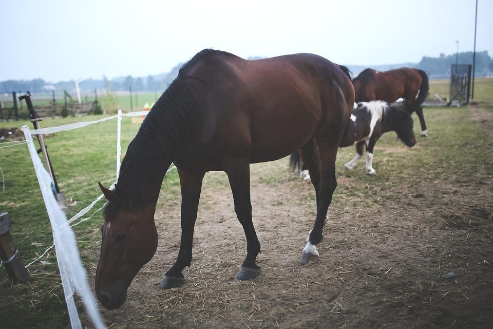 Horse, Animal, Farm, Farm Land, Stallion, Mammal