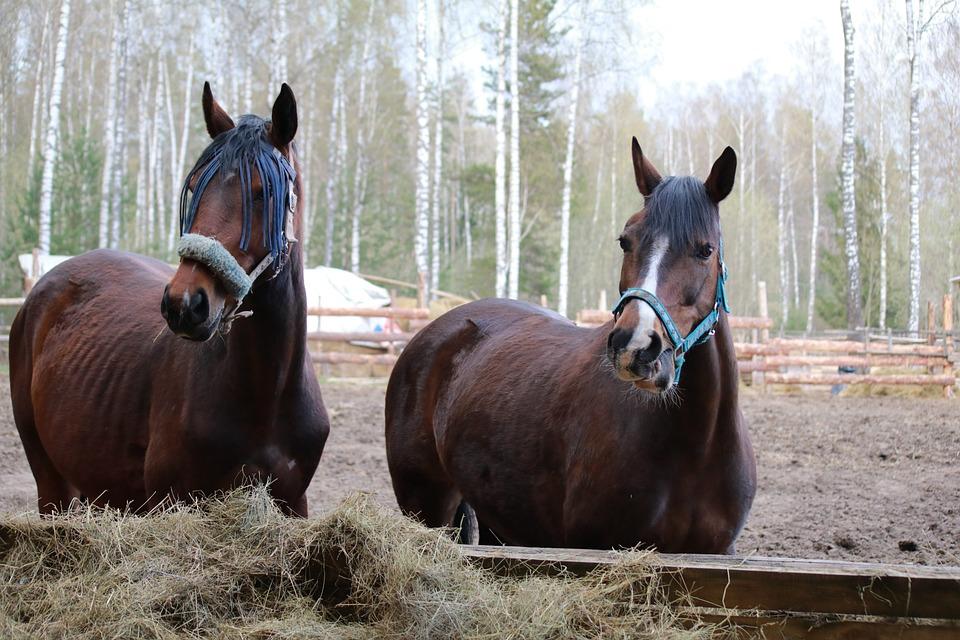 Horse, Nature, Horses, Pasture, Mane, Herd, Stallion