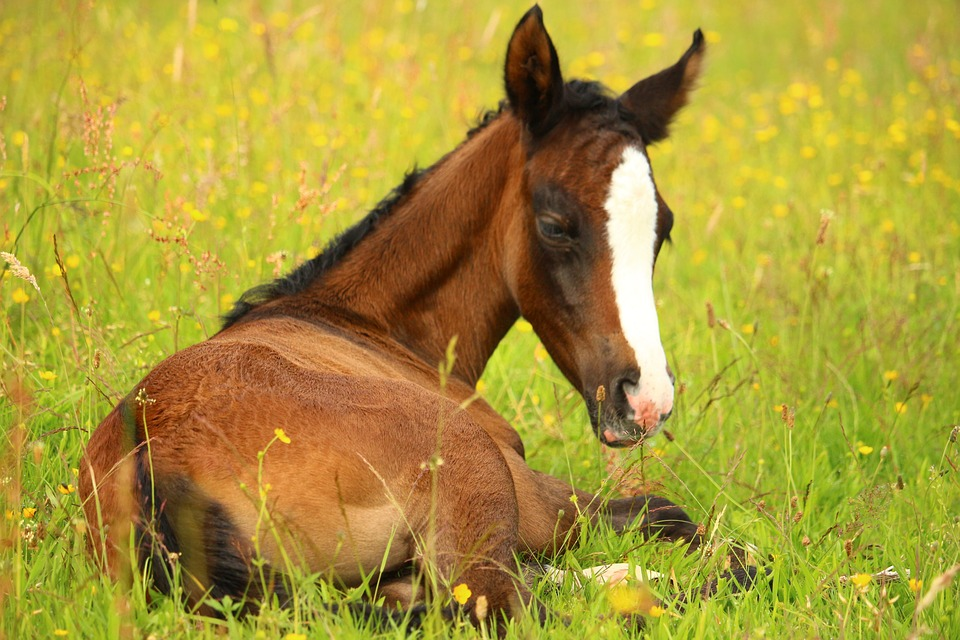 Foal, Horse, Brown, Pasture, Suckling, Grass, Meadow