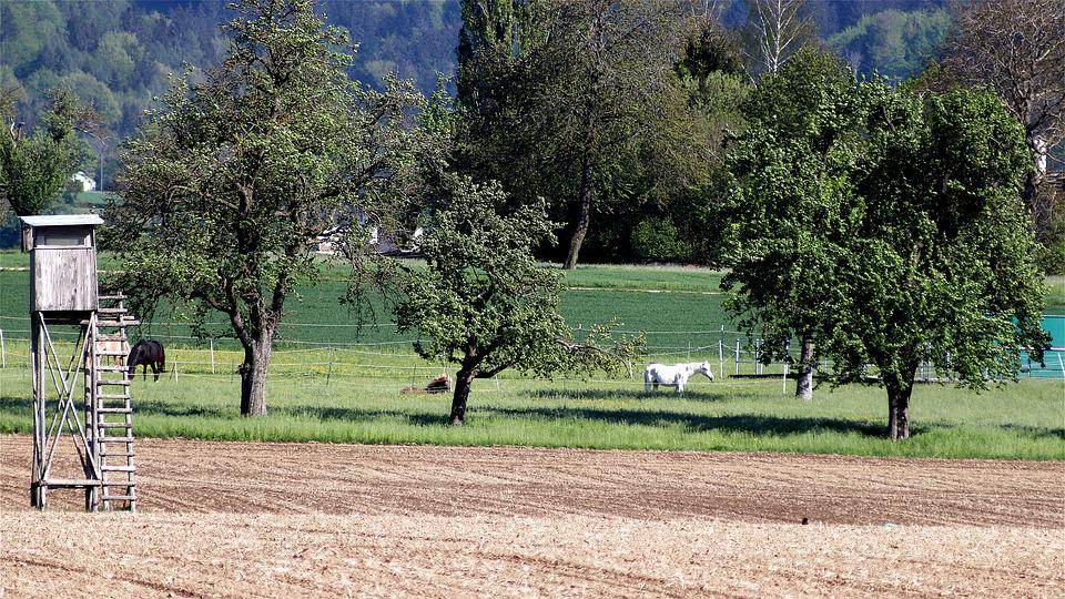 Horses, Fruit Trees, Horse, Horse Teeth, Agriculture