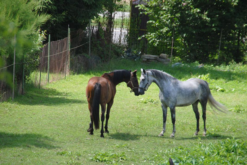 Horses, Horse, Meeting, Was Love, Mare, Meadow