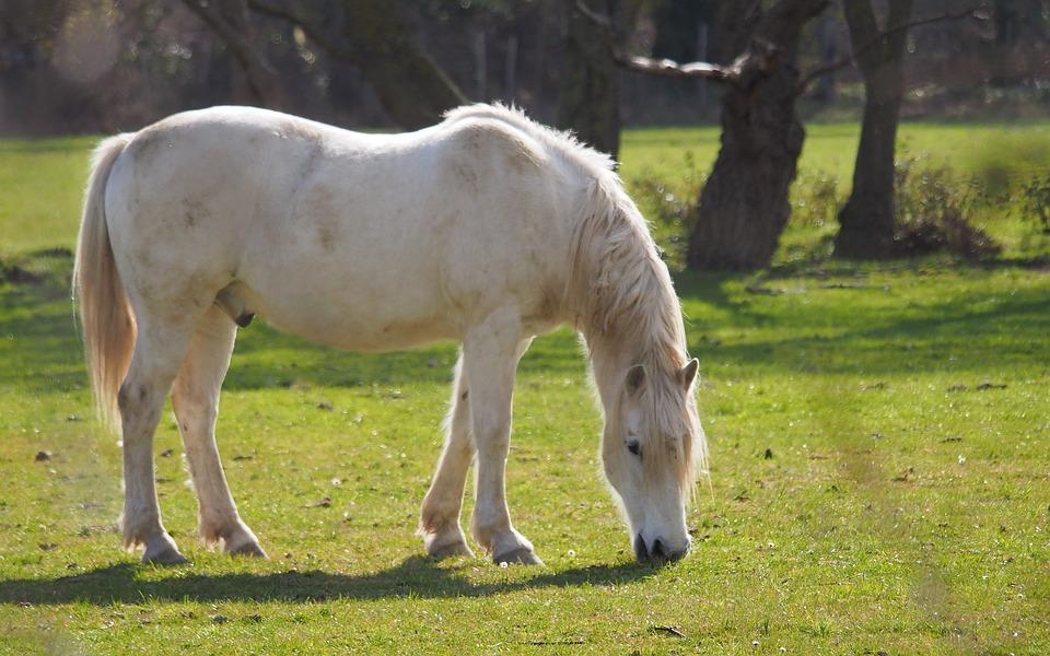 Animals, Horse, White, Prairie, Portrait