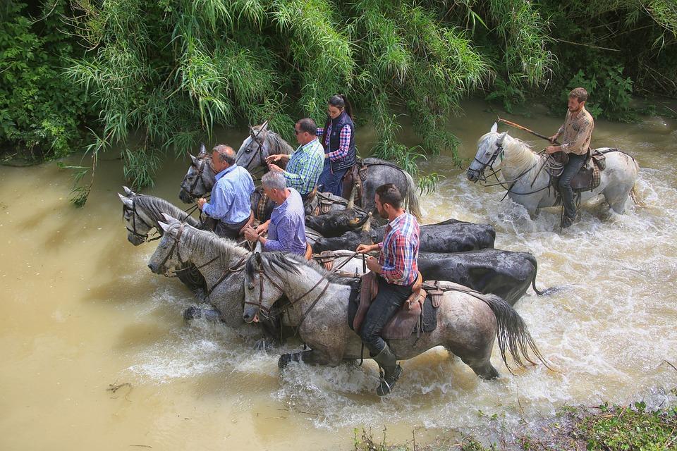 Horse, Water, Camargue, Horseback Riding, Nature, White