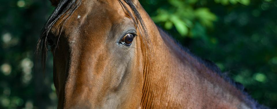 Horse, Look, Close Up, Equine, œil, Animal