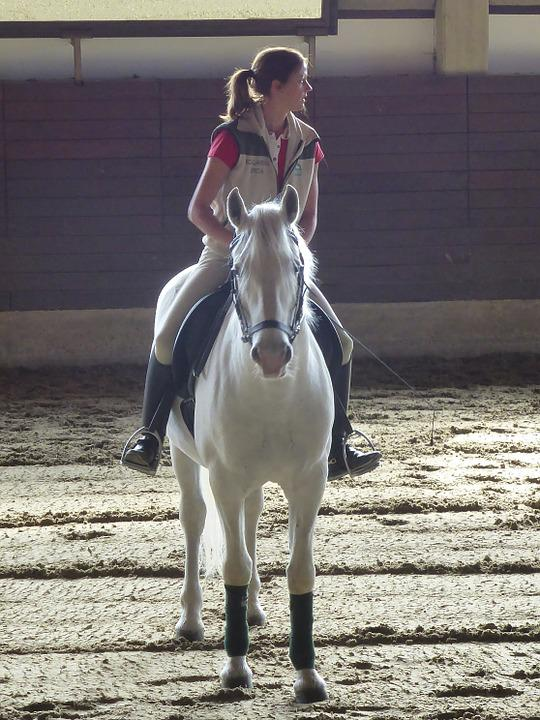 Horse, Rider, Horseback, Equestrian, Dressage, Equine