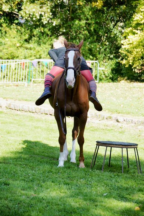 Show, Circus, Equestrian, Horseback Riding, Dressage