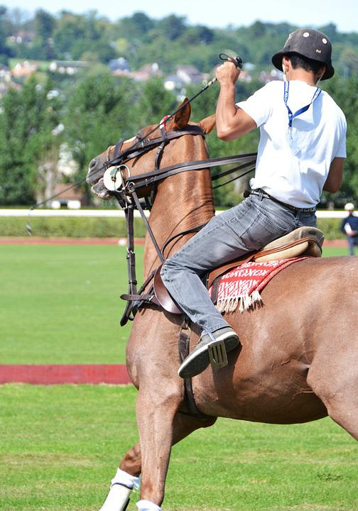 Horse, Sport, Horseback Riding, Horses, Competition