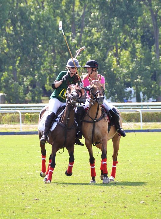 Sport, Horse, Horseback Riding, Competition, Horses