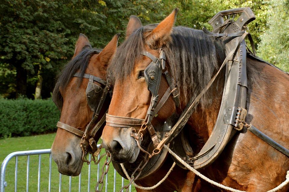 Horse, Animal, Horseback Riding, Equine, Mane, Portrait