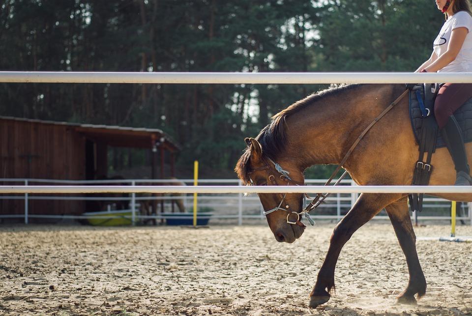 The Horse, Horseback Riding, Training, Animals, Nature