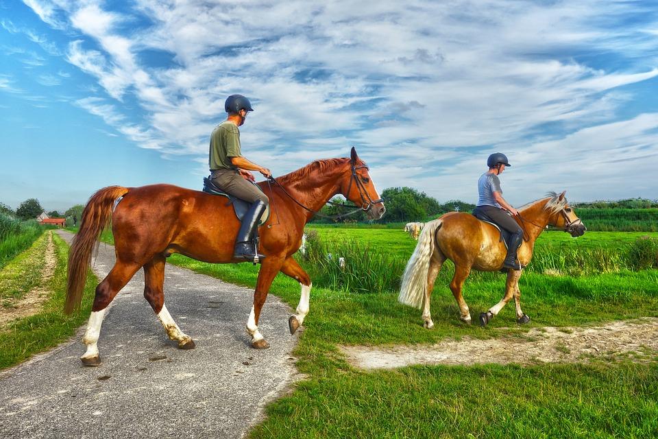 Animal, Mammal, Horse, Rider, Horseman, Horsewoman