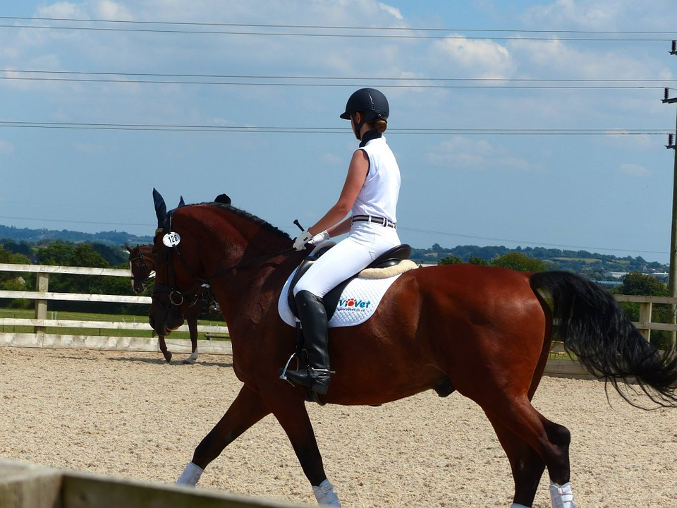 Horse, Horserider, Equine, Horseriding, Competition
