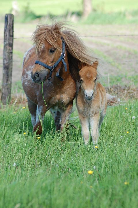 Horses, Foal, Animal, Pasture, Grass, Summer, Sweet