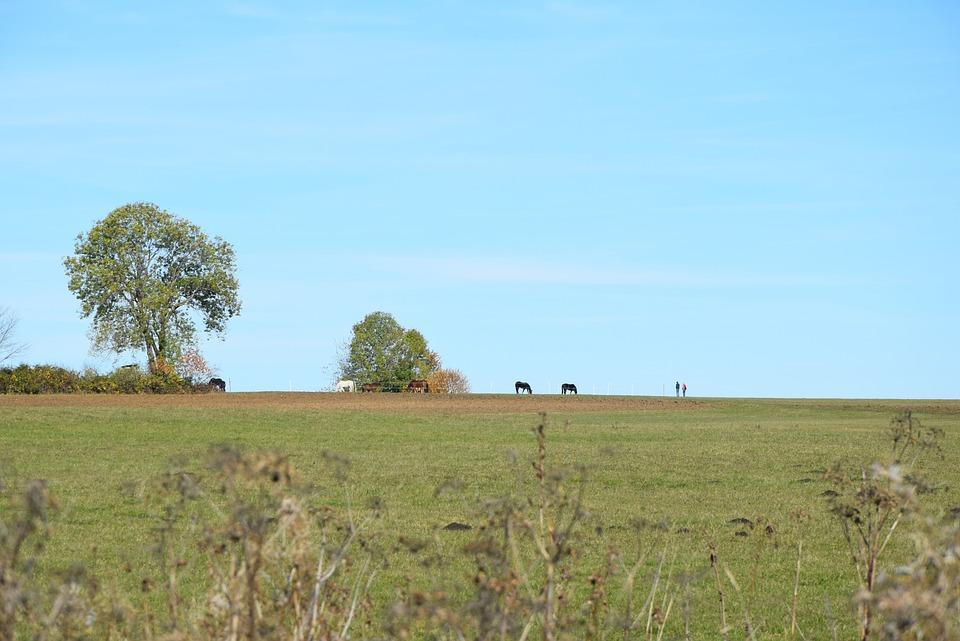 Rand Ecker Maar, Autumn, Horses, Pasture, Saved