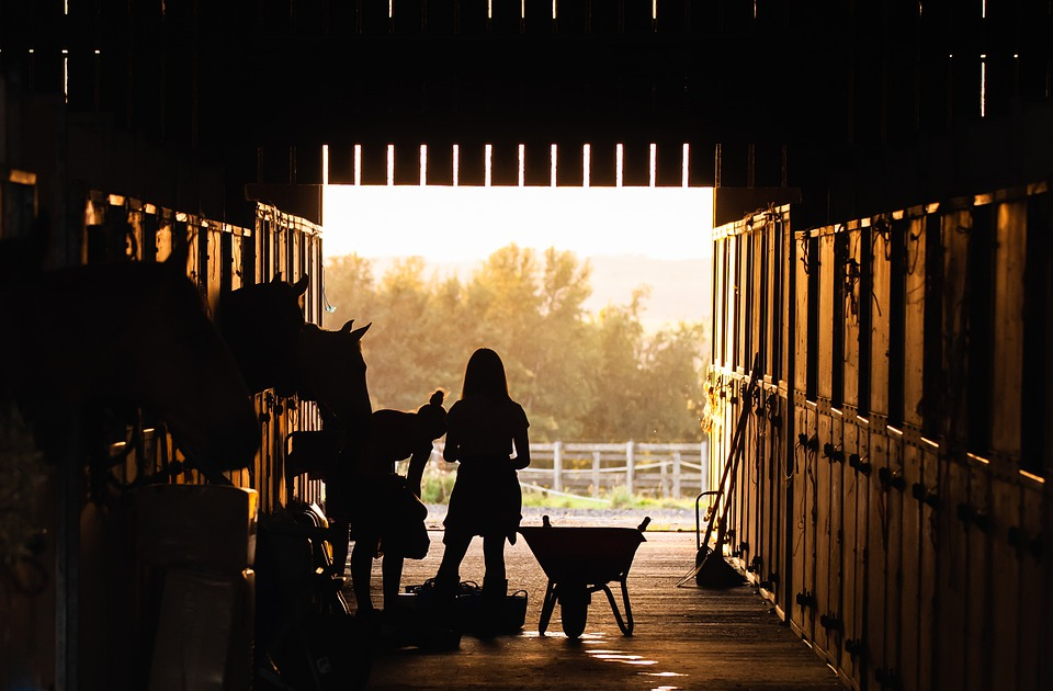 Ranch, Girl, Farm, Animal, Barn, Horses