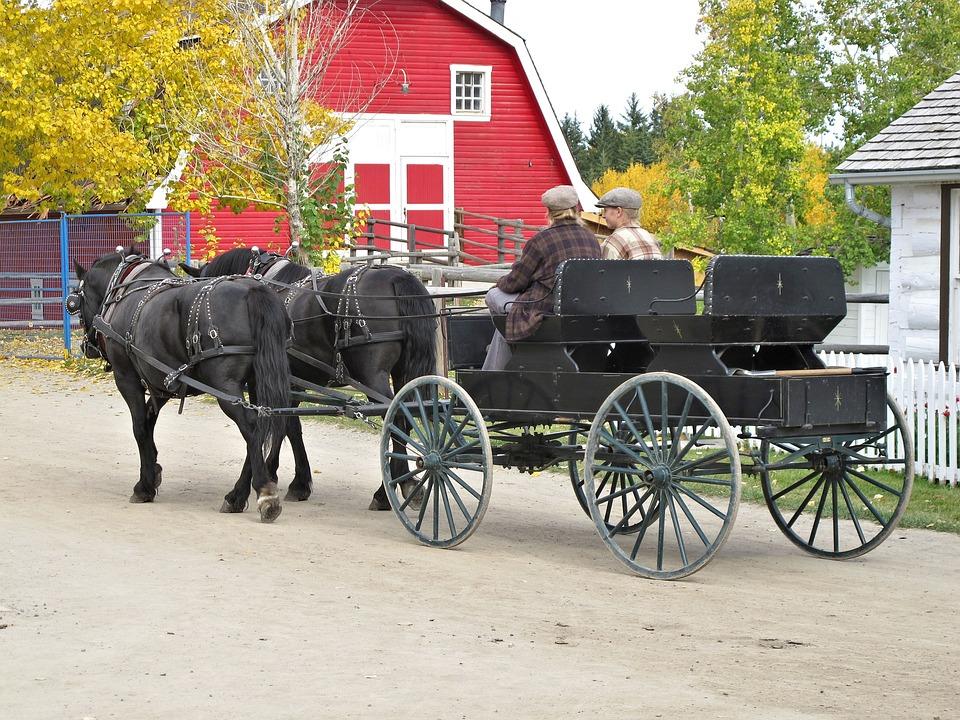 Horse Carriage, Horses, Park, Alberta, Canada
