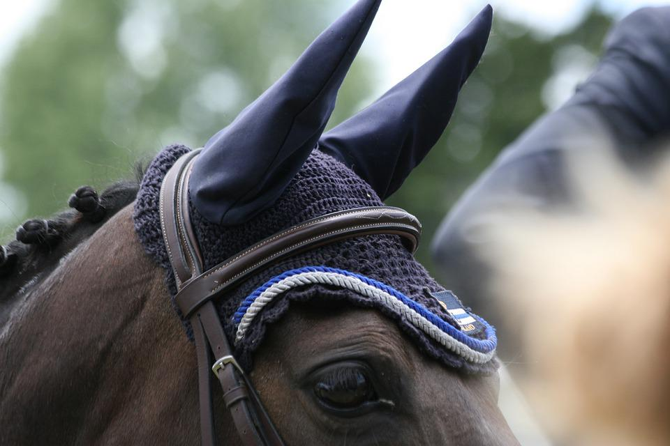 Horse, Showjumping, Horses, Equestrian, Competition