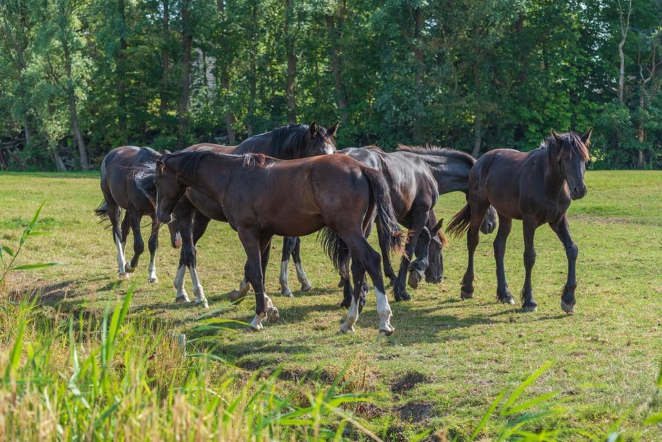 Horses, Nature, Animals, Landscape, Field, Farm