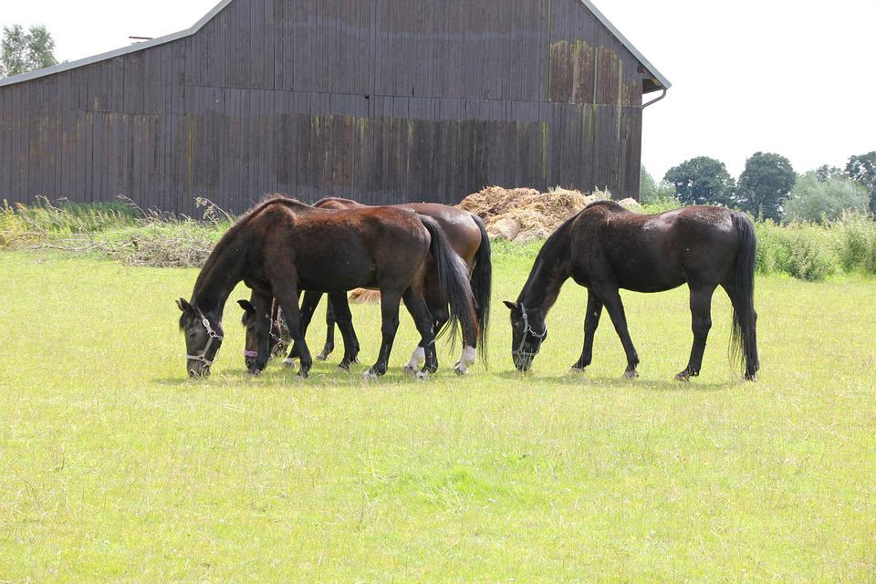 Horses, Group, Grass, Meadow