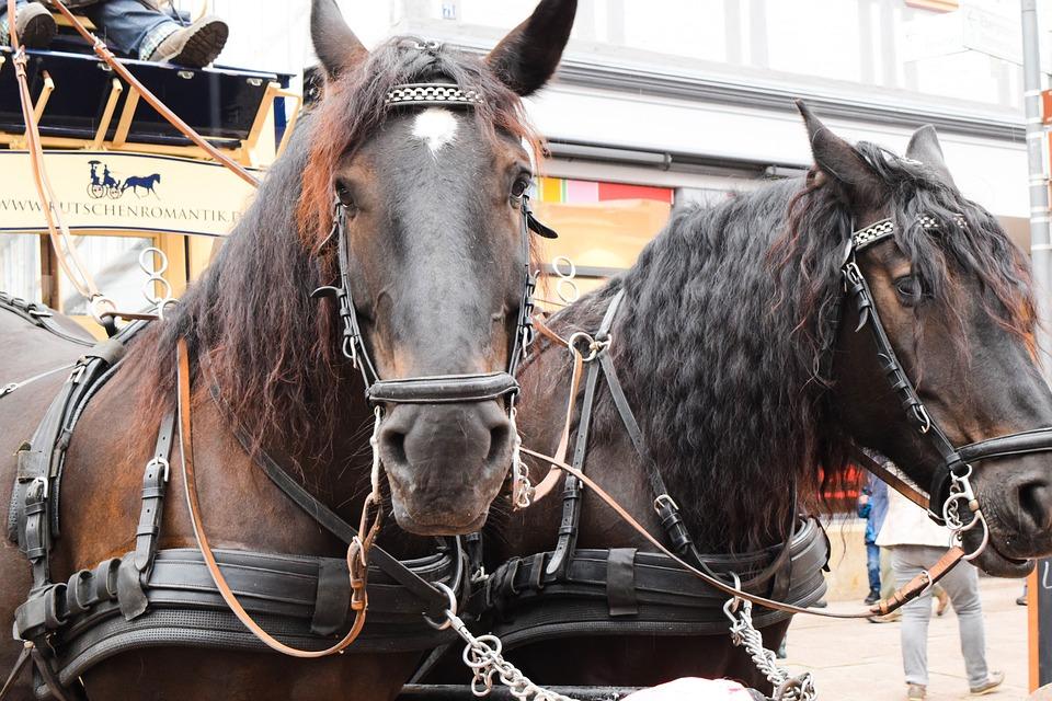 Horse, Double, Coach, Horses, Team, Horse Heads