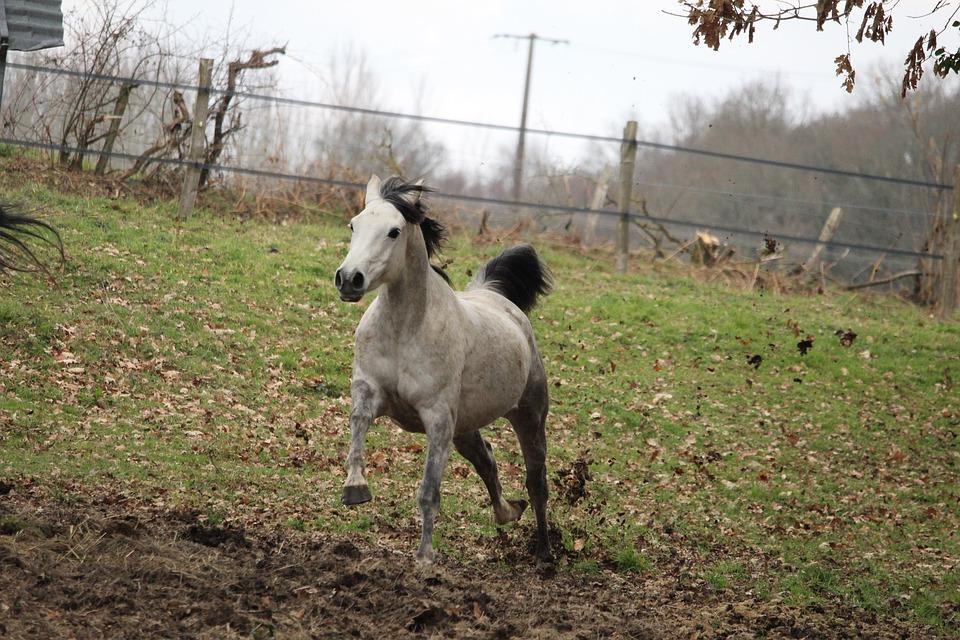 Horse, Horses, Nature, Animals, Equine, Mare, Mammals