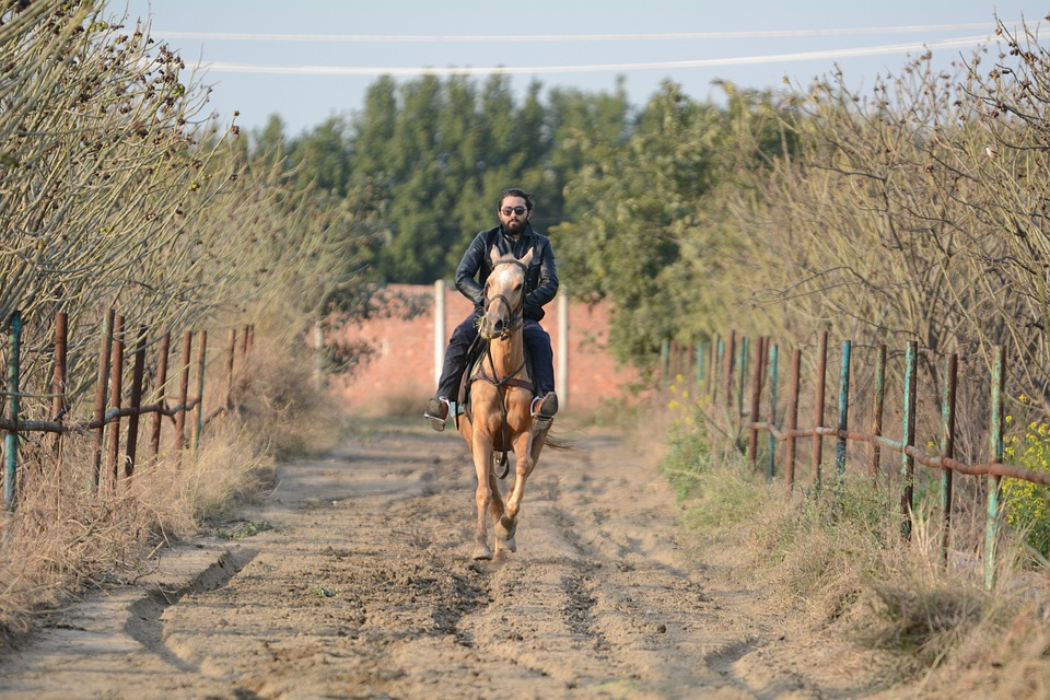 Horse Riding, Horses, Animal, Horse, Equestrian, Mare