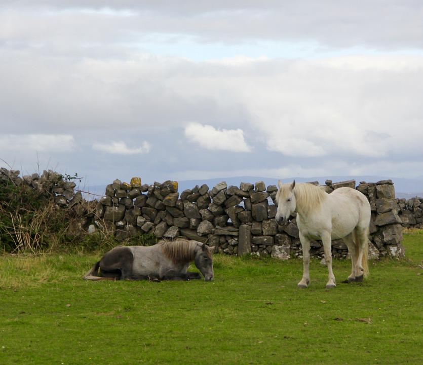 Ireland, Horses, Irish, Pasture, Countryside