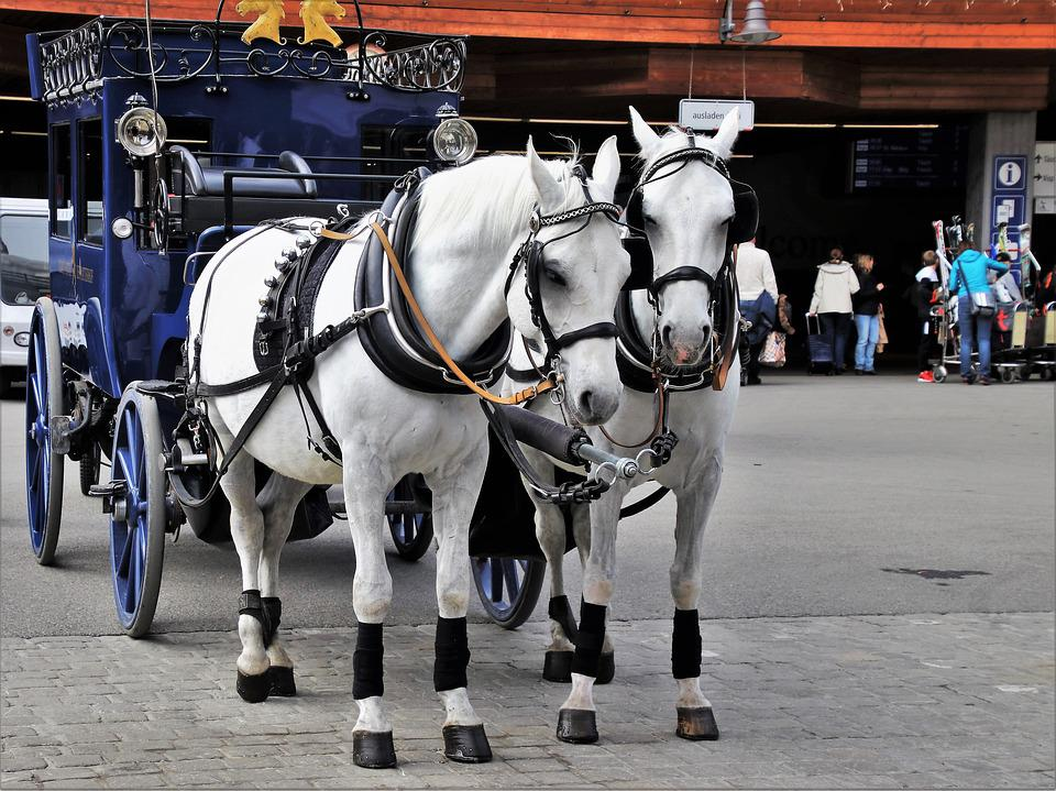 Horses, Para, Two, Total, Portable, Transport, Street
