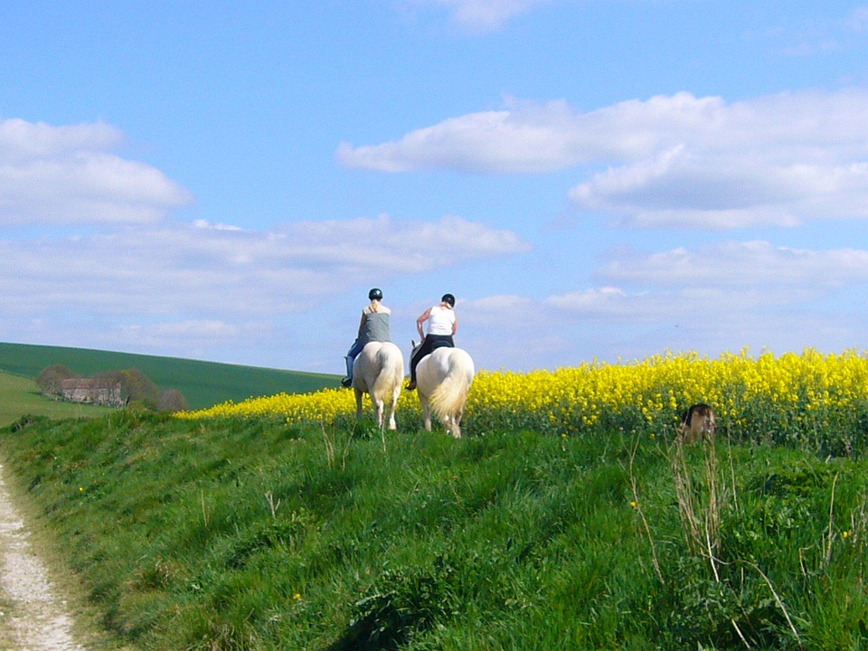 Horse Riding, Horses, Countryside, Ride, Horse, People