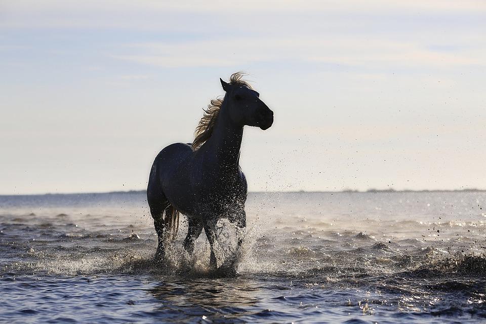 Horse, Gallop, Horses, Standard, Equine, Mane, Trotter