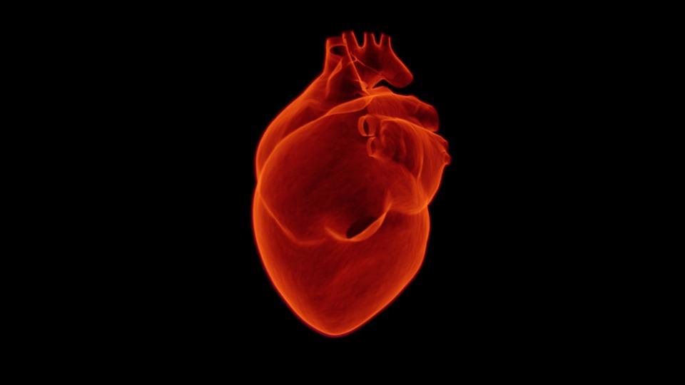 Heart, Medical, Health, Cardiology, Medicine, Hospital