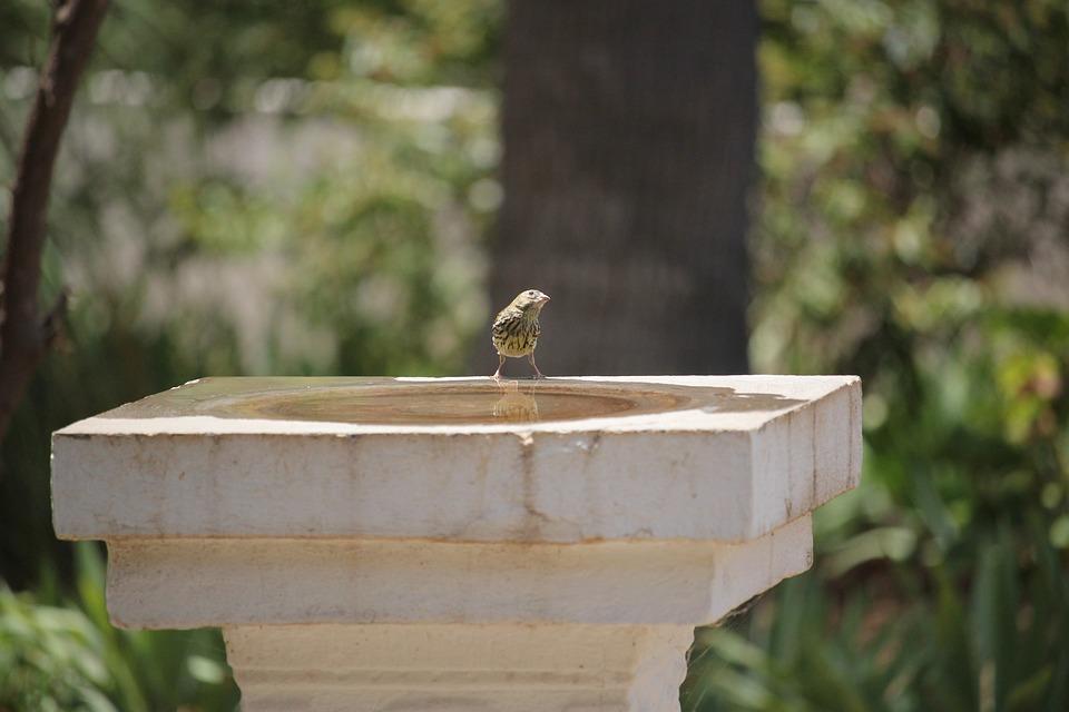 Canary, Hot, Summer, Nature, Bird, Water, Birdbath Bath