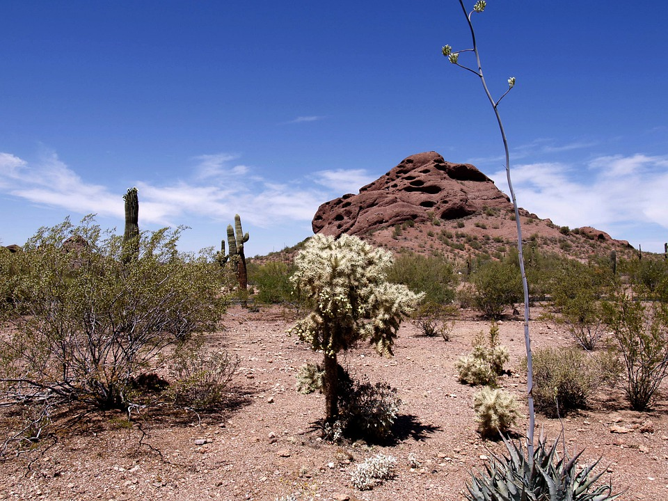 Desert, Arizona, Usa, Landscape, Scenery, Hot, Dry