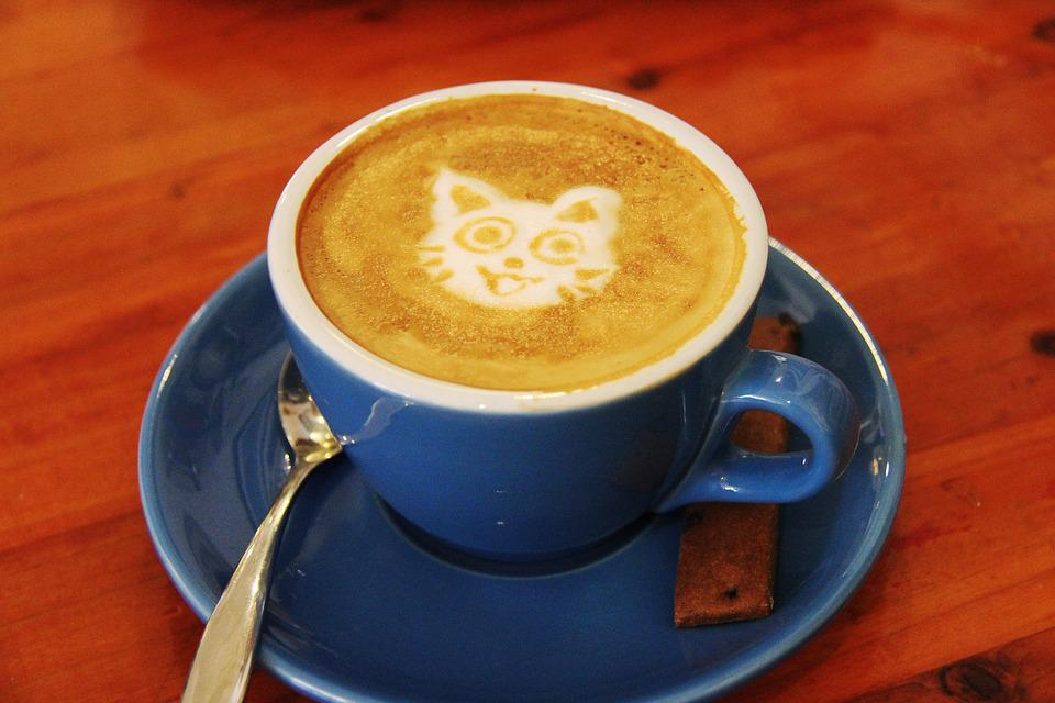 Coffee Cafe Cat Milk Drink Hot Flat White