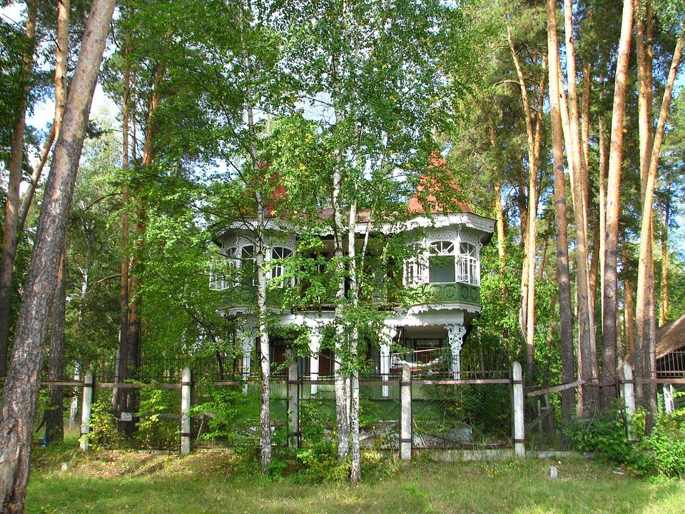 House, Birch, Pine, Fence, Summer, White, Bright, Tree
