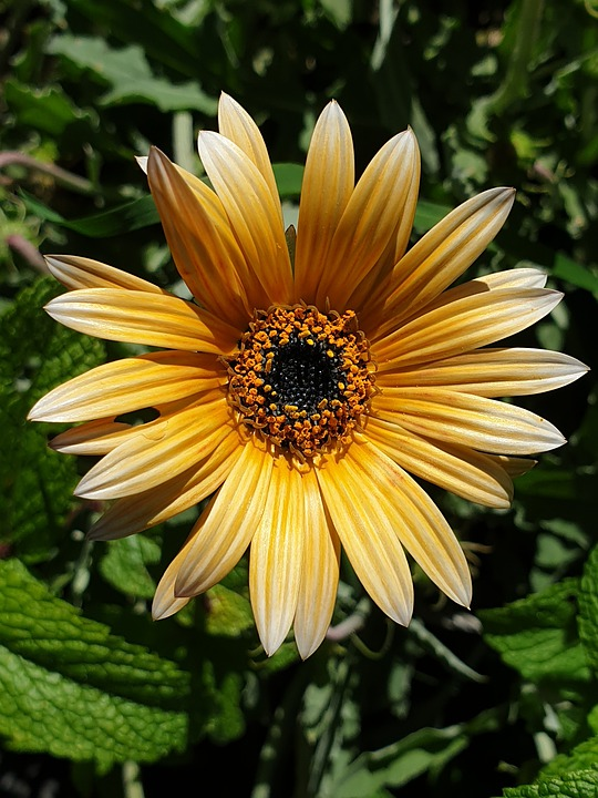 Tree, Bug, House Bug, Nature, Plant, Natural, Flower