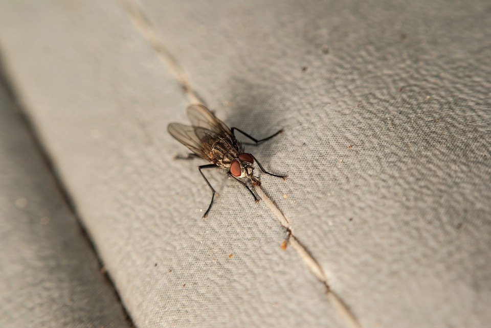 Fly, House Fly, Fabric, Bug, Insect, Red, Wings