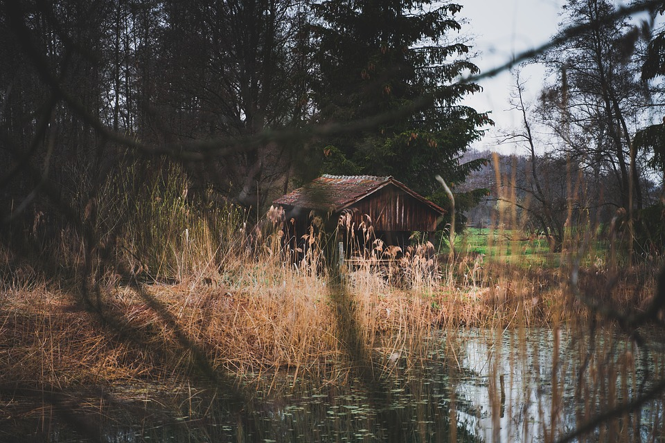 Forest, Hut, Nature, Landscape, House, Trees, Scenic