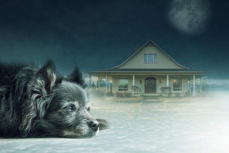 Dog, Solitude, House, Sky, Clouds, Light, Background