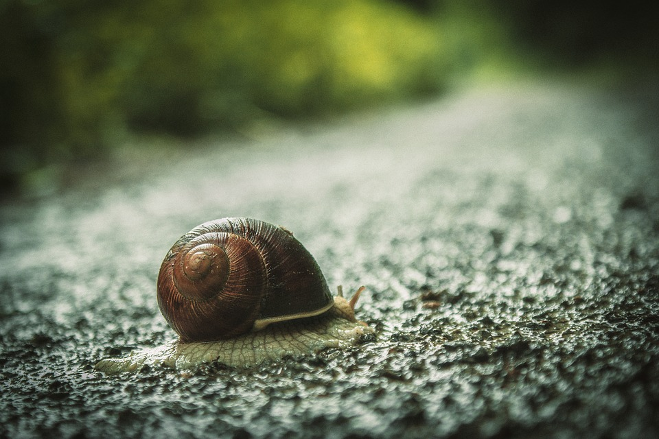 Snail, House Snail, Road, Probe