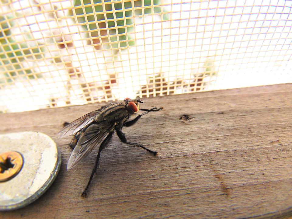Fly, Nature, Housefly, Macro