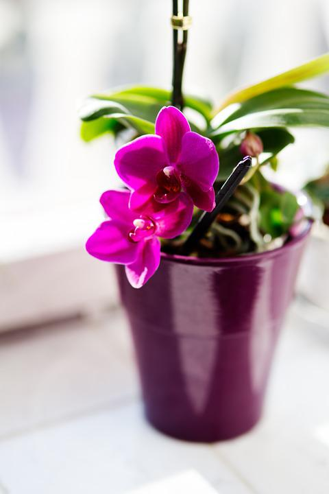 Free photo houseplants flower pink orchid max pixel orchid flower houseplants pink mightylinksfo