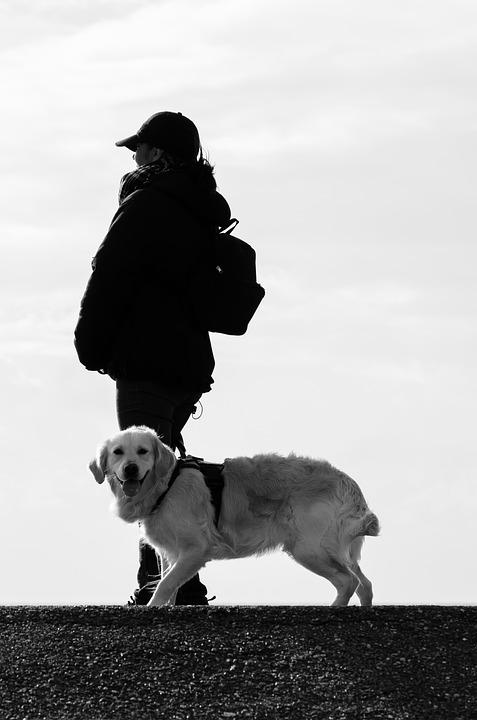 Dog, Human, Animal, Beach, Labrador, Dog Runs