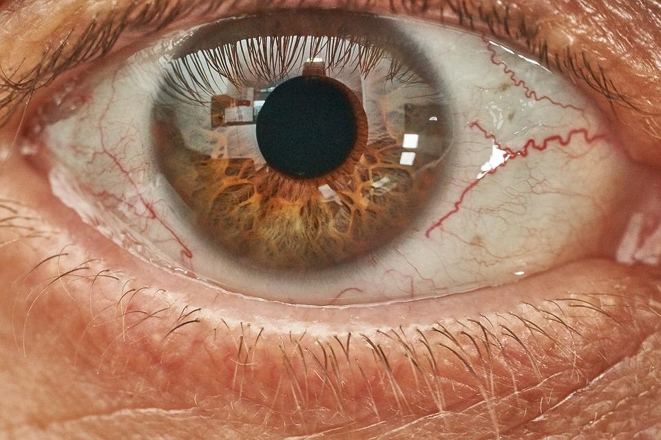 Eye, Eyeball, Human, Eyelash, Vision