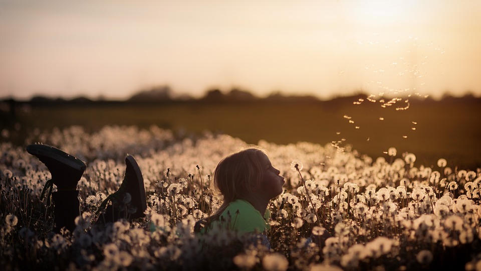 Flowers, Child, Girl, Dandelion, Field, Human, Children