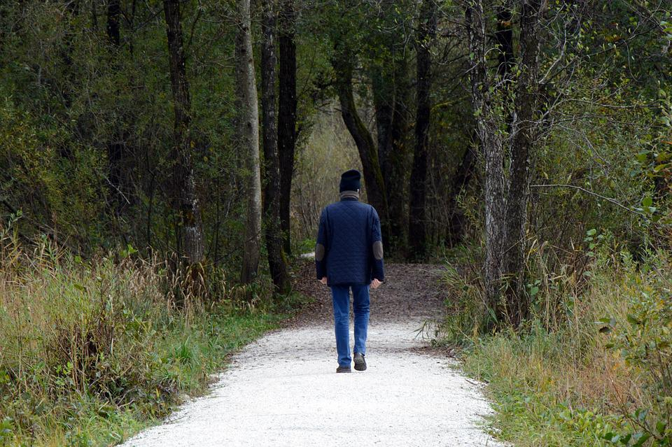Walkers, Walk, Forest, Nature, Human, Environment