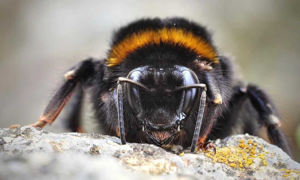 Hummel, Fictional, Insect