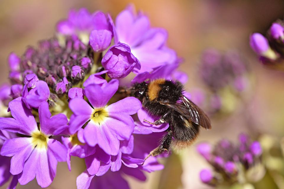 Flower, Drumstick, Flowers, Hummel, Insect